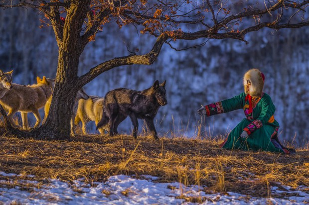 Cô gái Mông Cổ với dàn pet độc 8 con sói, 3 bạn trai đều đòi chia tay vì sợ cãi nàng sẽ bị ăn thịt - Ảnh 3.