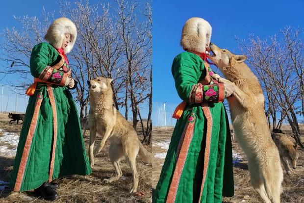 Cô gái Mông Cổ với dàn pet độc 8 con sói, 3 bạn trai đều đòi chia tay vì sợ cãi nàng sẽ bị ăn thịt - Ảnh 5.
