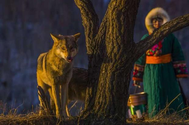 Cô gái Mông Cổ với dàn pet độc 8 con sói, 3 bạn trai đều đòi chia tay vì sợ cãi nàng sẽ bị ăn thịt - Ảnh 7.