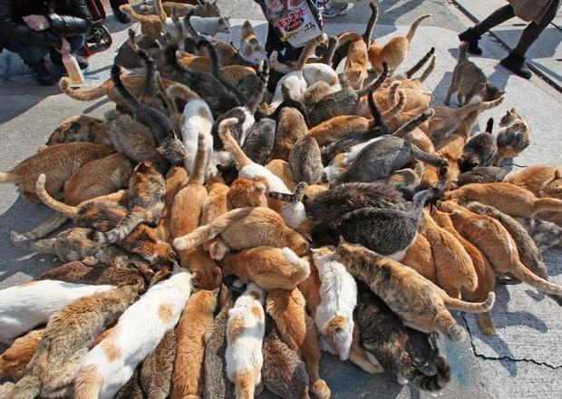 Đằng sau những con mèo bị bấm cụt tai là câu chuyện cảm động về cách người Nhật đối xử với chúng - Ảnh 4.