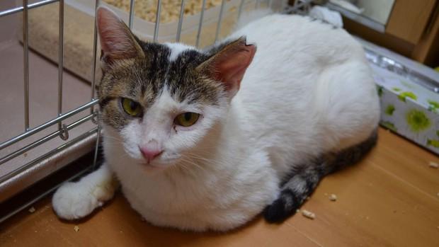 Đằng sau những con mèo bị bấm cụt tai là câu chuyện cảm động về cách người Nhật đối xử với chúng - Ảnh 5.