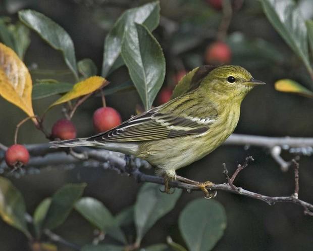 Hai loài chim có khả năng siêu dị: ăn gấp đôi trọng lượng cơ thể và lý do là... - Ảnh 3.