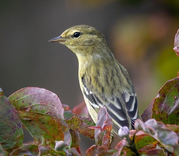 Hai loài chim có khả năng siêu dị: ăn gấp đôi trọng lượng cơ thể và lý do là... - Ảnh 2.