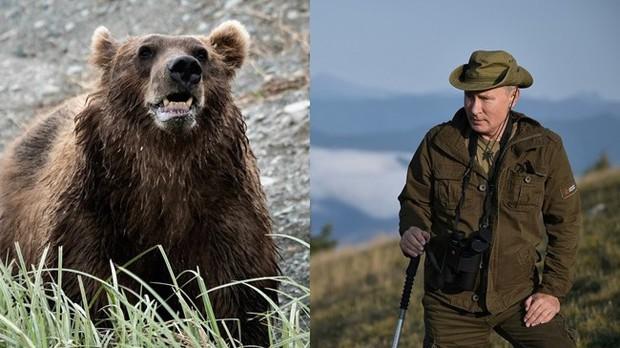 Tổng thống Putin kể chuyện từng đối mặt với gấu hoang - Ảnh 1.
