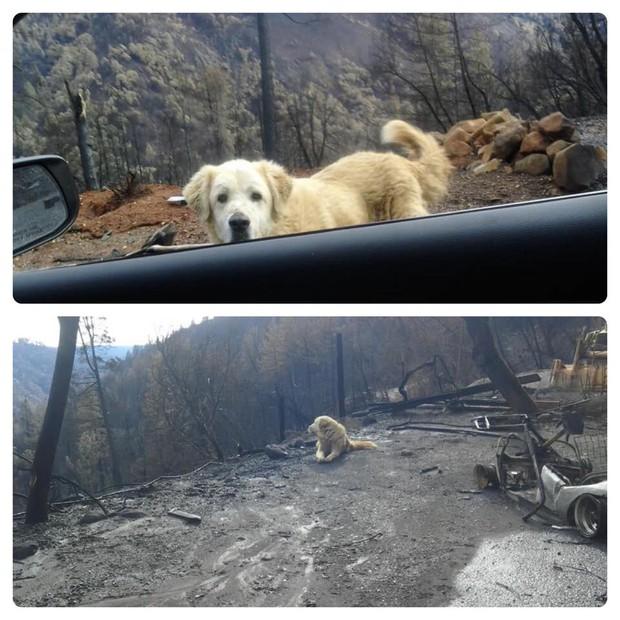 Sống sót sau vụ cháy California, chú chó vẫn quay về ngôi nhà cũ bị thiêu rụi chờ đợi chủ - Ảnh 1.