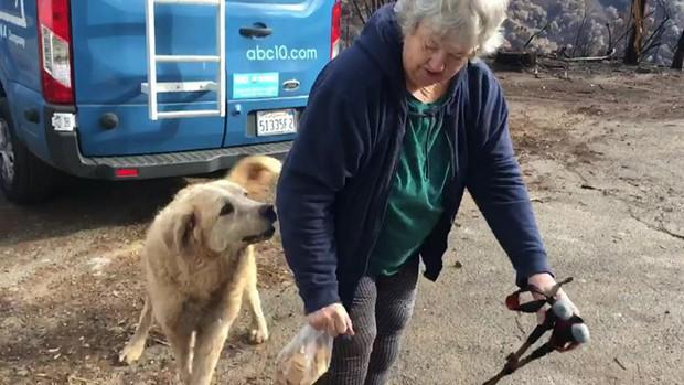 Sống sót sau vụ cháy California, chú chó vẫn quay về ngôi nhà cũ bị thiêu rụi chờ đợi chủ - Ảnh 2.