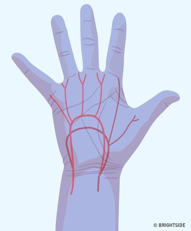 Bàn tay đột nhiên tê buốt ở các điểm này là dấu hiệu bạn không nên xem thường - Ảnh 6.
