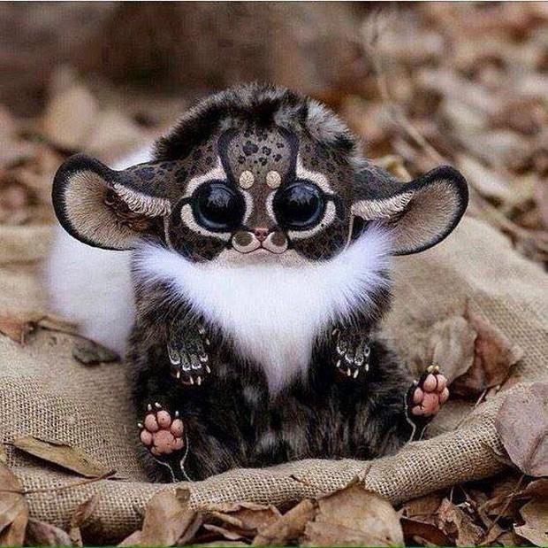Đây đã có thể là chú khỉ dễ thương và độc nhất thế giới nếu như... - Ảnh 1.