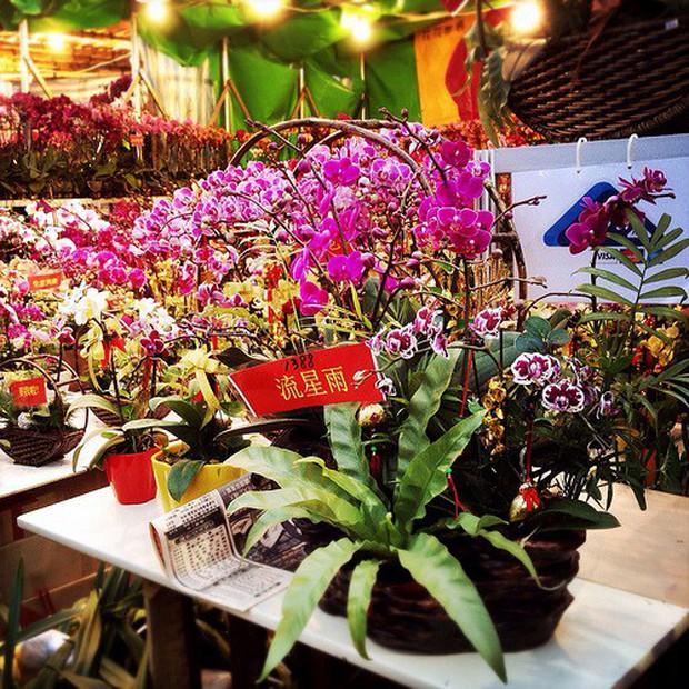 Tết Việt Nam thì không thể thiếu đào mai, còn người dân châu Á trưng hoa gì trong năm mới để có nhiều may mắn tài lộc? - Ảnh 2.