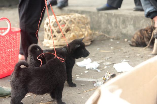 Thích thú đến chợ chó con ở Nghệ An vào ngày 29 Tết - Ảnh 10.