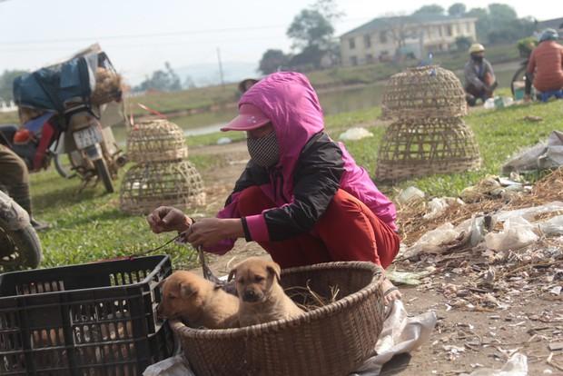 Thích thú đến chợ chó con ở Nghệ An vào ngày 29 Tết - Ảnh 3.