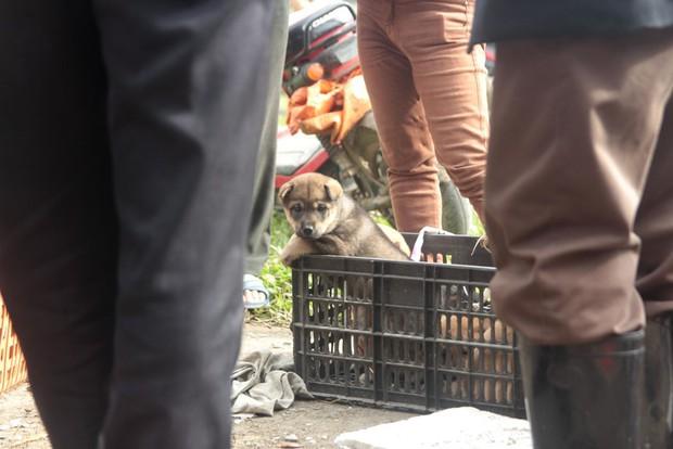 Thích thú đến chợ chó con ở Nghệ An vào ngày 29 Tết - Ảnh 5.