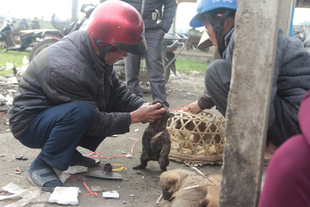 Thích thú đến chợ chó con ở Nghệ An vào ngày 29 Tết - Ảnh 8.