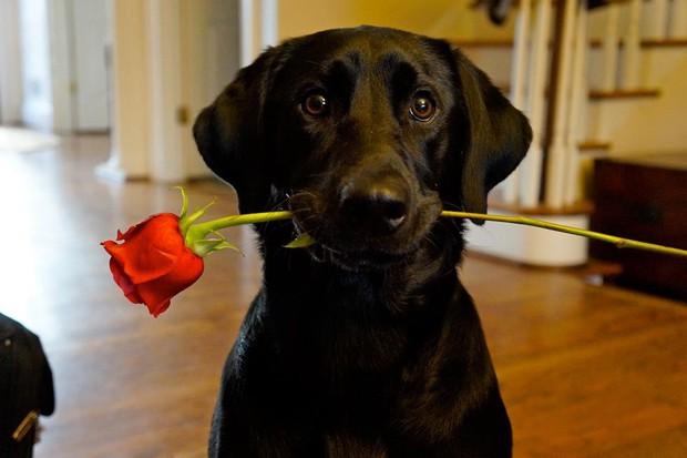15 gương mặt động vật đáng yêu nhất trong ngày lễ Tình Nhân - Ảnh 7.