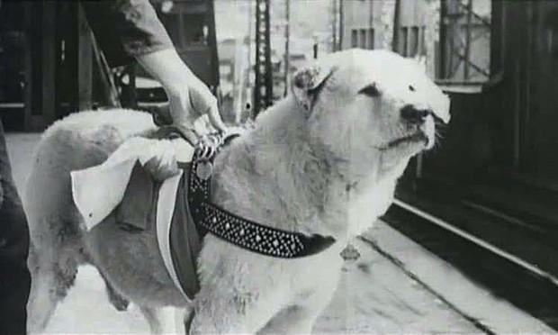 Câu chuyện cảm động về chú chó hơn 9 năm đợi người chủ quá cố ở sân ga rồi ra đi trong niềm tiếc thương của cả nước Nhật - Ảnh 2.
