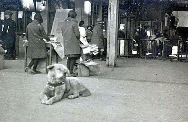 Câu chuyện cảm động về chú chó hơn 9 năm đợi người chủ quá cố ở sân ga rồi ra đi trong niềm tiếc thương của cả nước Nhật - Ảnh 3.