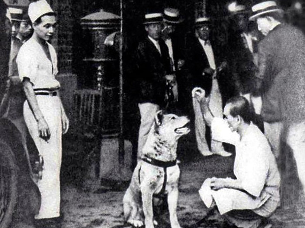 Câu chuyện cảm động về chú chó hơn 9 năm đợi người chủ quá cố ở sân ga rồi ra đi trong niềm tiếc thương của cả nước Nhật - Ảnh 4.