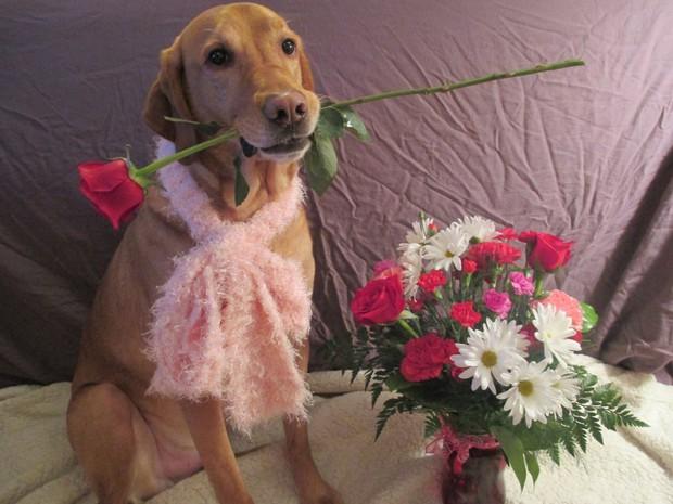 15 gương mặt động vật đáng yêu nhất trong ngày lễ Tình Nhân - Ảnh 15.