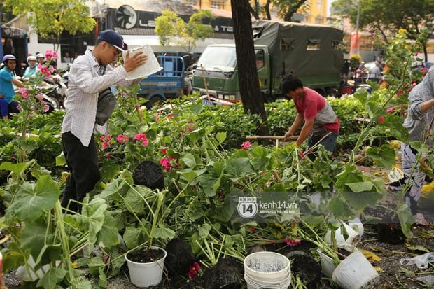 Clip: Không bán hết hàng trưa 30 Tết, nhiều tiểu thương tự tay đập nát chậu hoa, vứt vào thùng rác - Ảnh 8.