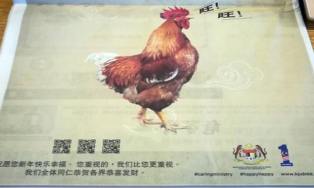 Malaysia xin lỗi vì để gà sủa gâu gâu - Ảnh 1.