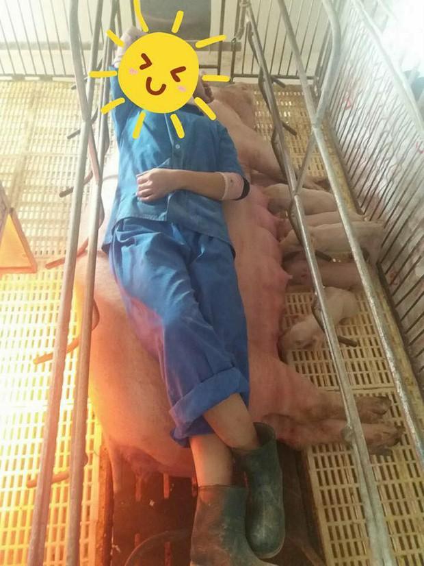 Tâm sự của nữ sinh thú y không biết đến không khí ngày Tết bởi đang miệt mài chăm lợn ăn, lợn đẻ - Ảnh 3.