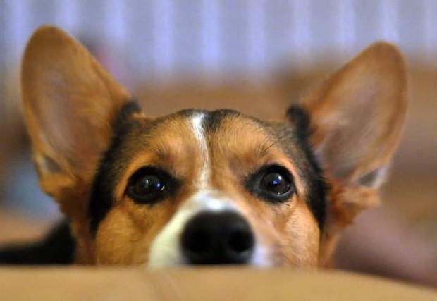 Nhân năm con Chó, đây là những sự thật cool ngầu chẳng ai biết về loài vật dễ thương nhất quả đất này - Ảnh 10.