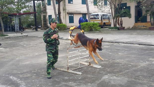 Bi hài: Vợ chiến sĩ Biên phòng ghen vì chồng quá thân với... chó - Ảnh 3.