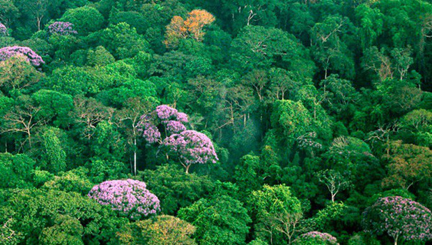 Không ngờ biến đổi khí hậu lại khiến rừng nhiệt đới này nở hoa - Ảnh 1.