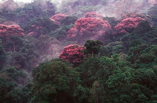 Không ngờ biến đổi khí hậu lại khiến rừng nhiệt đới này nở hoa - Ảnh 2.