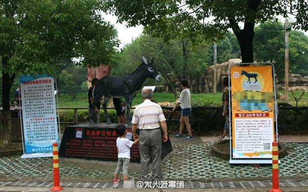 Thả chó con làm mồi cho trăn ngay trước mắt du khách, sở thú Trung Quốc khiến cư dân mạng phẫn nộ - Ảnh 5.