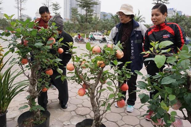 Bonsai táo Trung Quốc bị đồn có độc: Ông chủ vặt quả ăn tại chỗ - Ảnh 2.