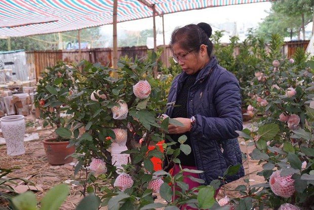 Bonsai táo Trung Quốc bị đồn có độc: Ông chủ vặt quả ăn tại chỗ - Ảnh 3.