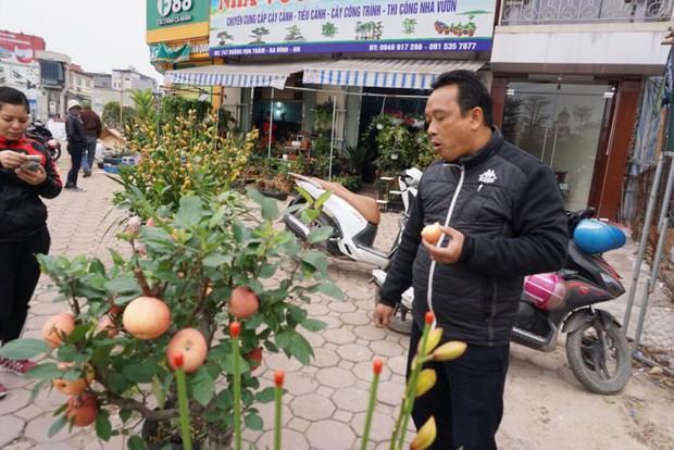 Bonsai táo Trung Quốc bị đồn có độc: Ông chủ vặt quả ăn tại chỗ - Ảnh 4.