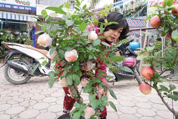 Bonsai táo Trung Quốc bị đồn có độc: Ông chủ vặt quả ăn tại chỗ - Ảnh 8.