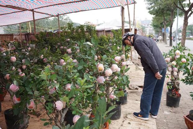 Bonsai táo Trung Quốc bị đồn có độc: Ông chủ vặt quả ăn tại chỗ - Ảnh 9.