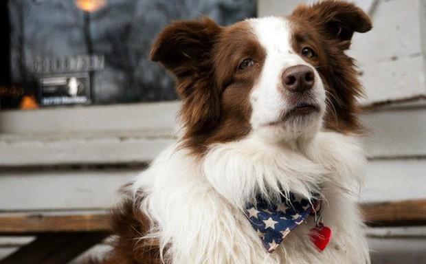 Câu chuyện về chú chó tranh cử Tổng thống Mỹ - Ảnh 1.