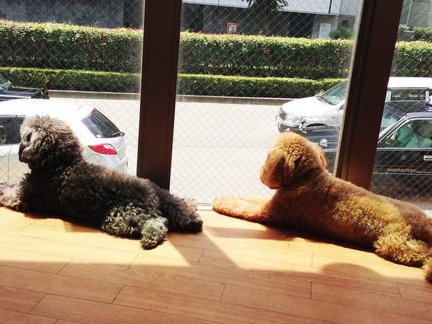 Những quán cafe pet độc đáo tại Tokyo: có cả quán cafe dê - Ảnh 5.