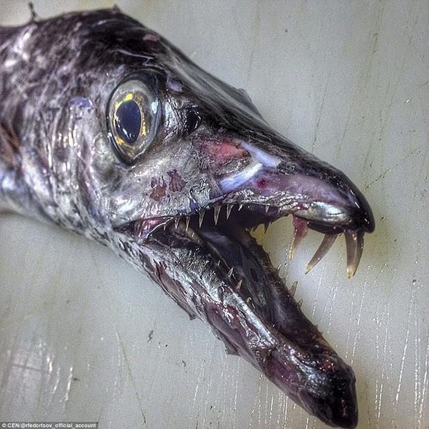 Ngư dân Nga chuyên săn thủy quái ngoài hành tinh lại lên sóng, và lần này ông mang đến điều gì - Ảnh 17.