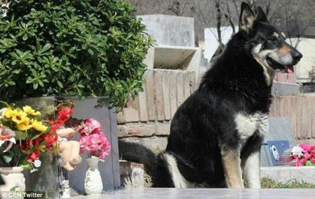 Chó ngủ cạnh mộ chủ suốt 11 năm cho đến chết - Ảnh 2.