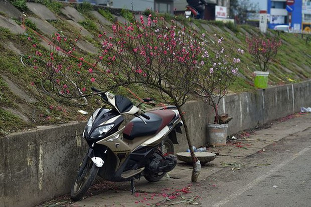 Nhà giàu Hà Nội chi tiền triệu chơi hoa lê rừng sau Tết - Ảnh 11.