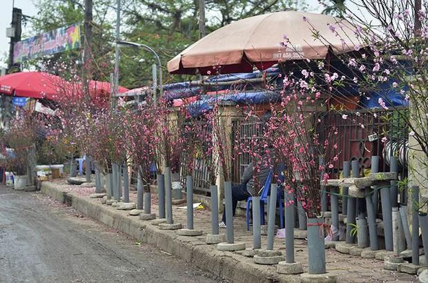 Nhà giàu Hà Nội chi tiền triệu chơi hoa lê rừng sau Tết - Ảnh 17.