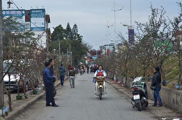Nhà giàu Hà Nội chi tiền triệu chơi hoa lê rừng sau Tết - Ảnh 3.