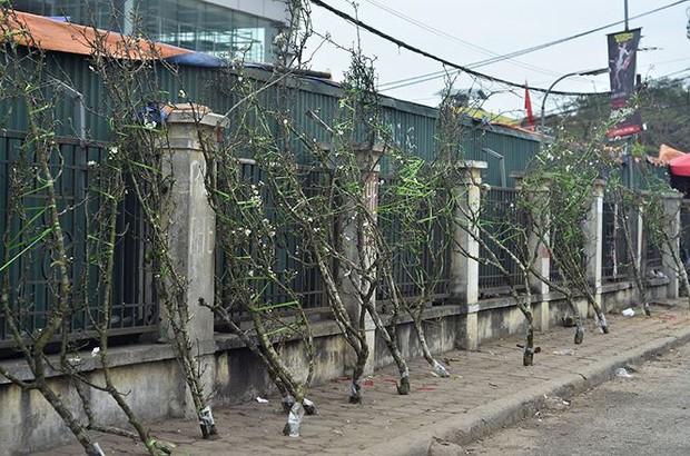 Nhà giàu Hà Nội chi tiền triệu chơi hoa lê rừng sau Tết - Ảnh 4.