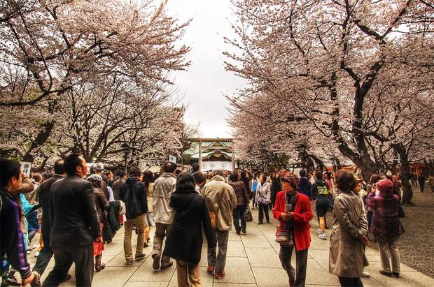 Sakura - loài hoa chứng nhân lịch sử cho Nhật Bản trong suốt hàng thế kỷ - Ảnh 5.