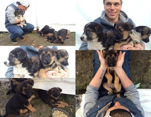 Vận động viên trượt tuyết Mỹ giải cứu 90 chú chó được nuôi lấy thịt, đóng cửa cả trang trại chó khi đang thi đấu tại Hàn Quốc - Ảnh 5.