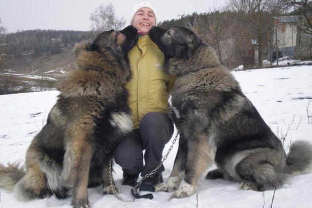 Đây là loài chó hiếm hoi sở hữu lực cắn còn mạnh mẽ hơn cả ngao Tây Tạng - Ảnh 1.