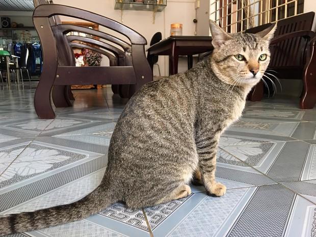 Khoe clip dạy mèo sủa gâu gâu, cô gái bỗng nhiên được 500 anh em săn đón vì giọng nói quá dễ thương - Ảnh 3.