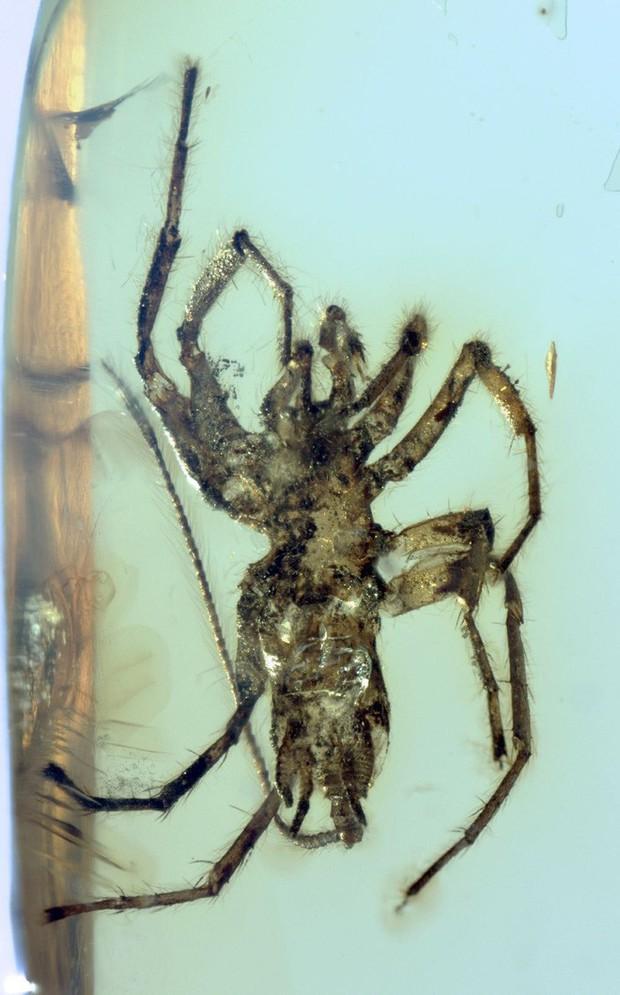 Nhện thường đã đáng sợ, nhưng loài nhện cổ đại này sẽ khiến nhiều người phải chết khiếp - Ảnh 3.