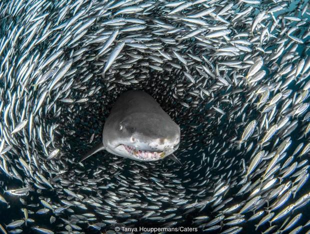 Tại sao cá mập luôn là nỗi khiếp sợ, dù chúng ta giết tới hàng triệu con mỗi năm? - Ảnh 4.