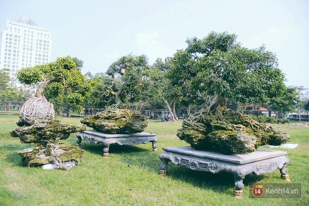 Cận cảnh cặp sanh cổ thụ được đại gia trả 4 tỷ đồng không bán ở Sài Gòn - Ảnh 2.